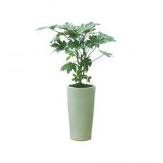 관엽식물-팔손이-30